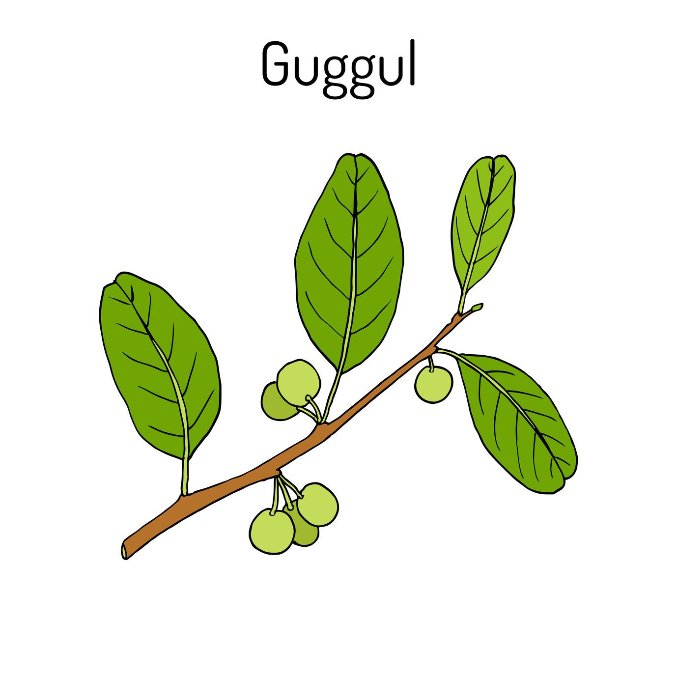 guggul-surveiller-taux-cholestérol