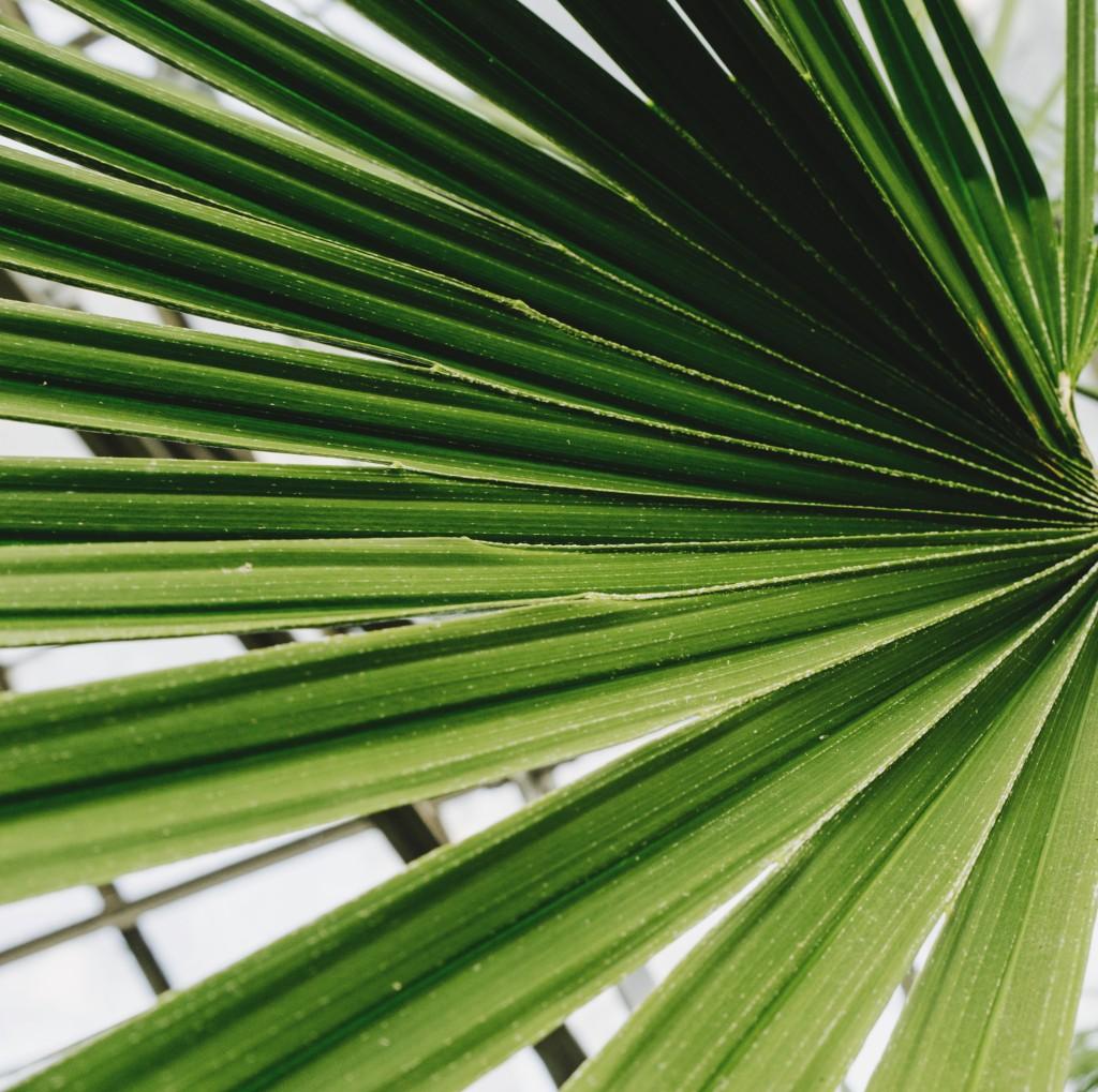 palmier-floride-cheveux